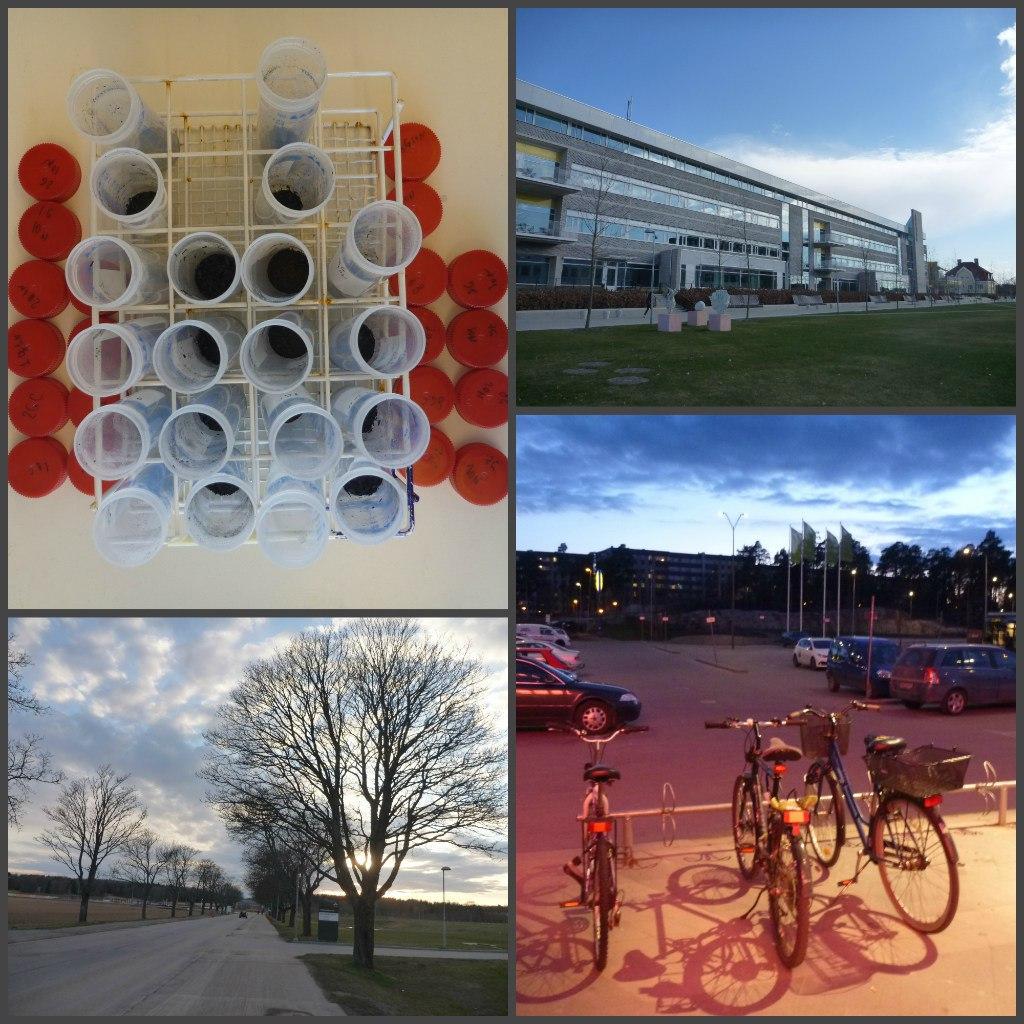 один будний день аспирантки в шведском университете