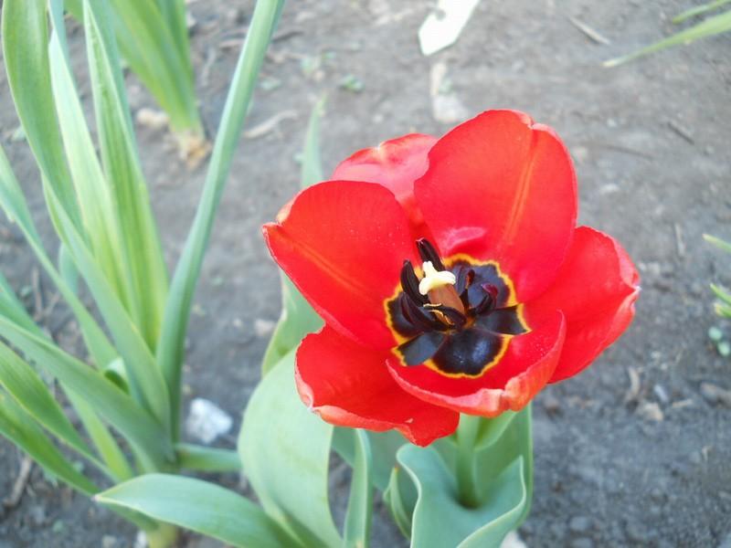 один майский день в Липецкой области