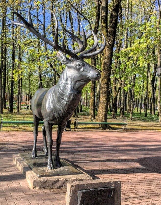 один олений день проведенный в городе Смоленск, фото 20