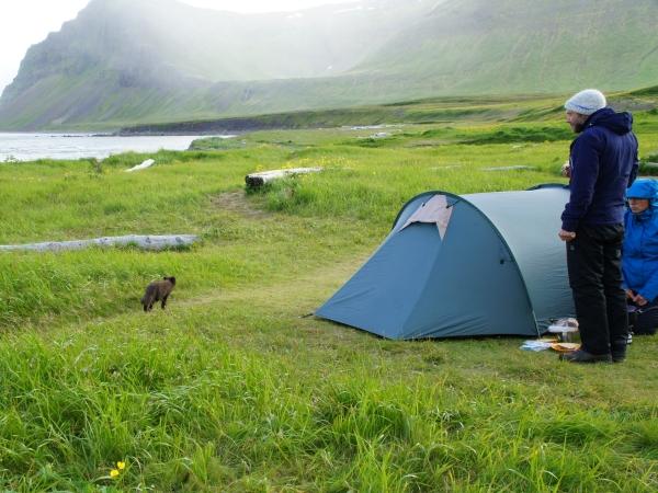 один день переводчика в местности Хорнстрандир, Исландия, фото 15