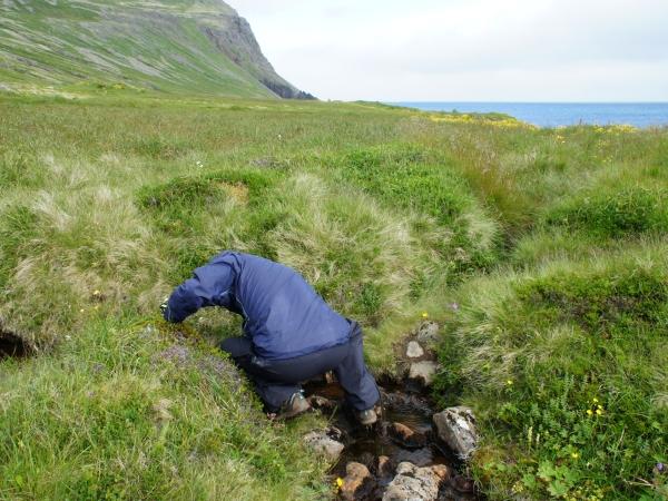 один день переводчика в местности Хорнстрандир, Исландия, фото 30