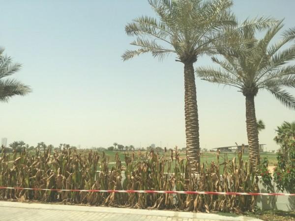 один мой выходной день в Дубае, фото 30