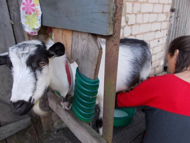 один мой день рождения в деревне на севере Липецкой области, фото 13