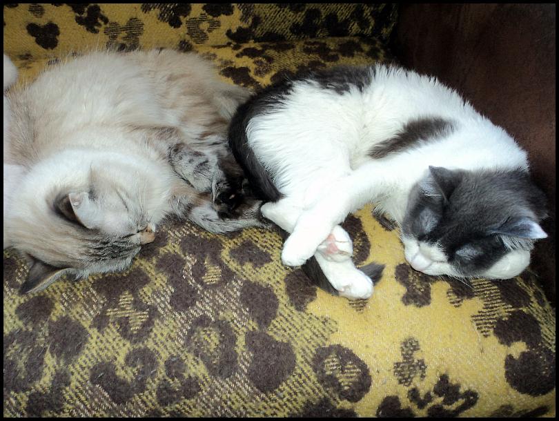 одна моя суббота в обществе двух кошек, фото 18