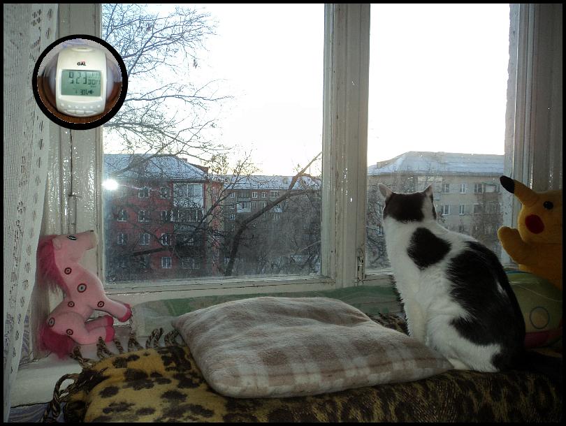 одна моя суббота в обществе двух кошек, фото 6