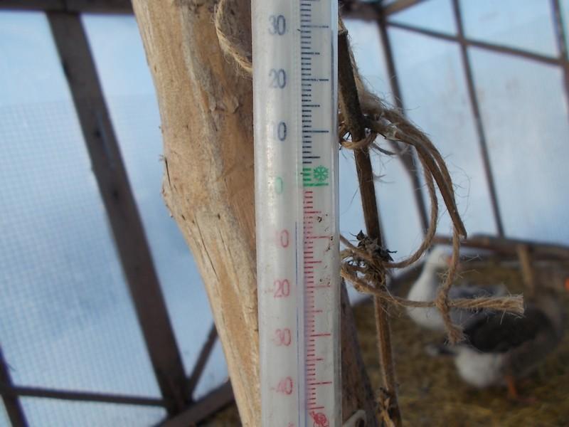 один мой морозный день в деревне Липецкой области, фото 10