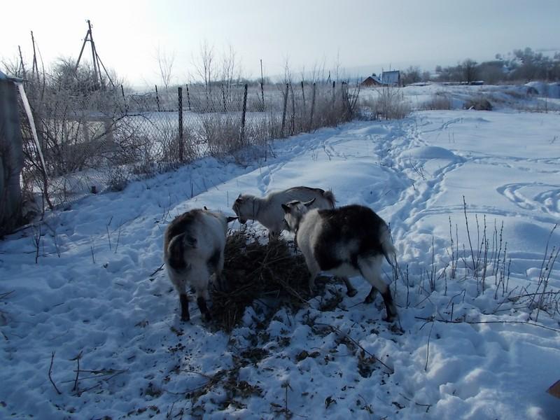 один мой морозный день в деревне Липецкой области, фото 12