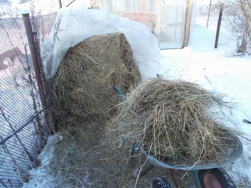 один мой морозный день в деревне Липецкой области, фото 13