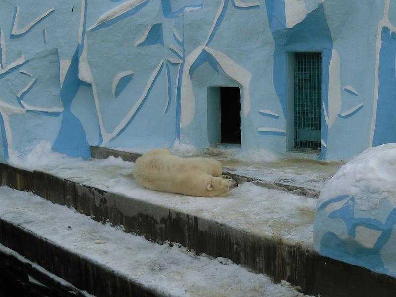 один мой будний день в Новосибирске, фото 17