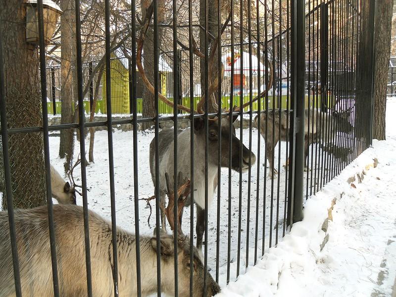 один мой будний день в Новосибирске, фото 28