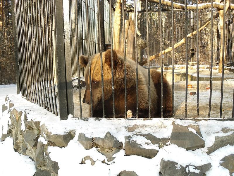 один мой будний день в Новосибирске, фото 30