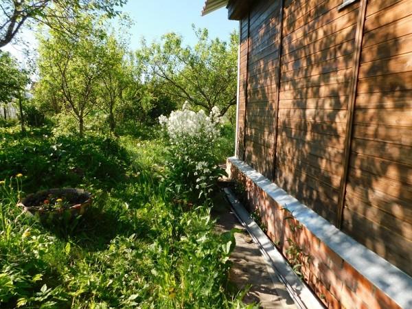 один мой весенний день проведенный на даче, фото 19