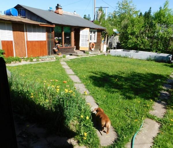 один мой весенний день проведенный на даче, фото 7