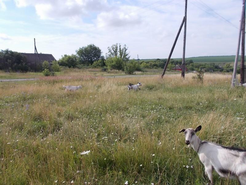 один мой день в деревне Липецкой области, фото 18