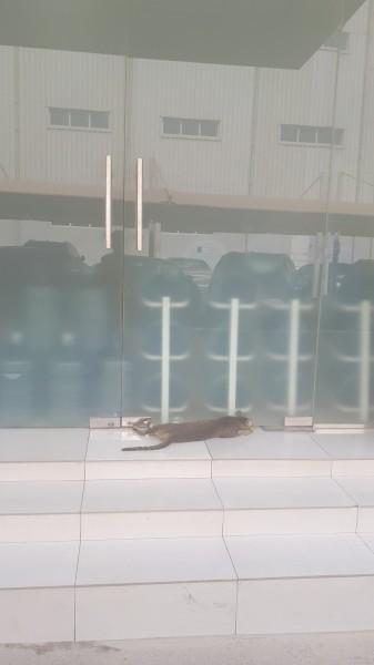 один мой рядовой день в Дубае, фото 18